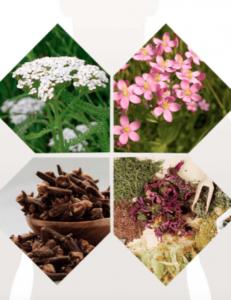 Detoxic - lietošana - sastāvs - kā lietot