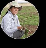 Peruvian Maca - kā lietot - sastāvs - lietošana